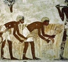 From Paleo to Present – a brief history of the human diet